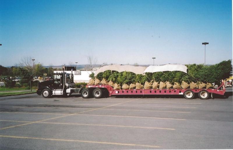 Tree Installation Ithaca, NY